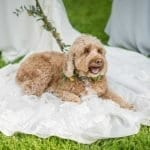 Tips for Happy Dogs at Weddings