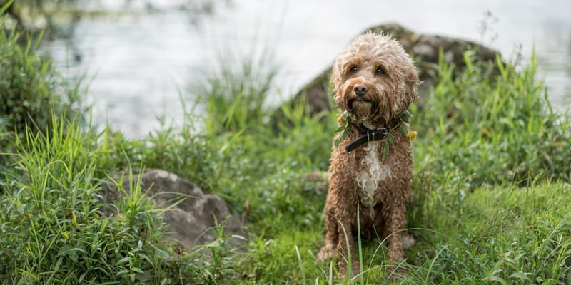A very Happy Dog at the Lakeside wedding venue - Perfect for dog friendly walkies