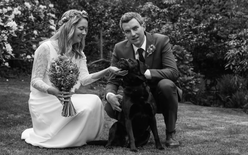 Marry me - Marry my dog - Happy dogs at weddings