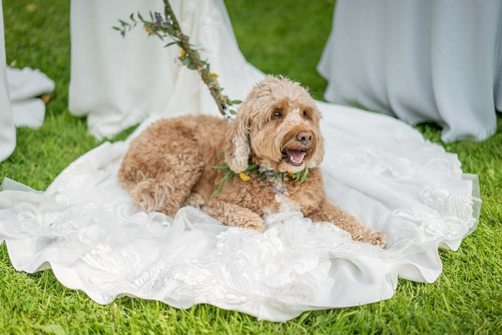 A nice and cosy dog bed - and a very happy wedding dog
