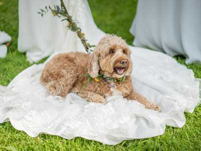 Bringing my dog to my wedding