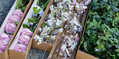Boxes of Lovely Silk Flowers