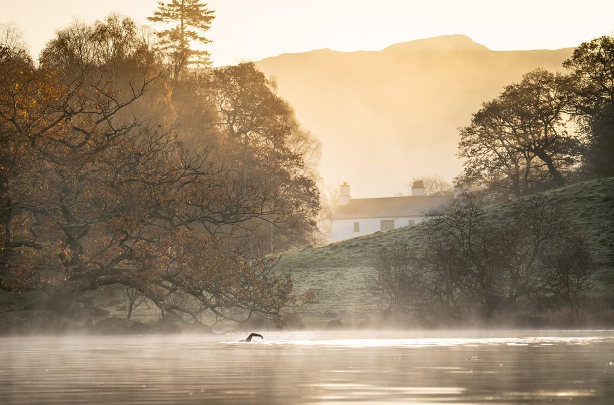 Wild Open Water Swimming in Rydal Water